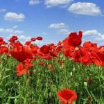 С праздником примирения и памяти